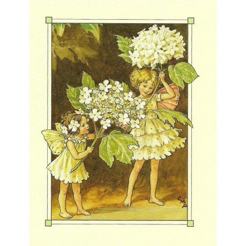 Postal Antigo Importado The Guelder Rose Fairy - Cicely