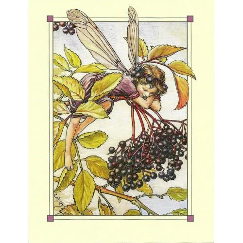 Postal Antigo Importado The Beechnut Fairy - Cicely